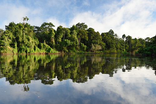 Black Water Reflections in the Amazon Jungle   by Scott Ableman