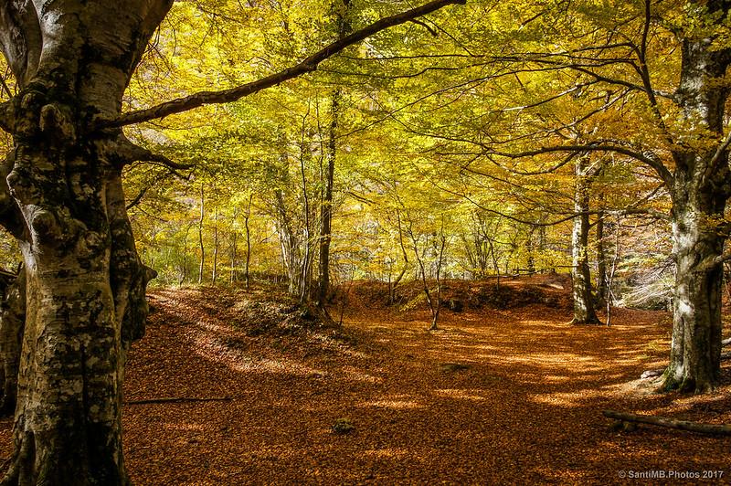 De regreso al bosque dorado
