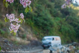 Pfutsero Phek Nagaland (21) | by travelling slacker