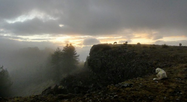 Soir de Brouillard