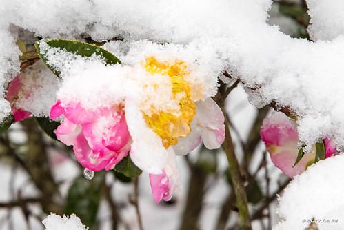 snow_december_2017-66 | by mcneese72