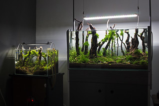 ada 45p and 80 cm forests   by nigel_kh