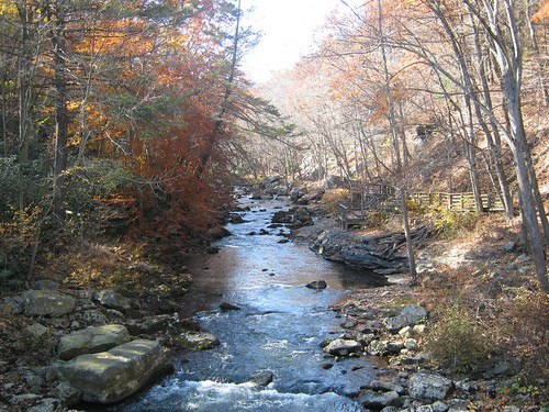 Photo of Creek in Savage River State Forest