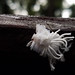 Arthropods of Malaysian Borneo