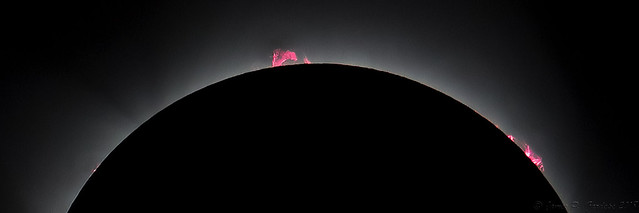 Prominences: Total Solar Eclipse 2017