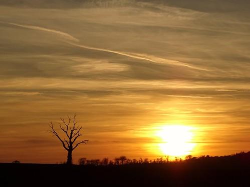 sunset tree lonelytree knettishallheath suffolk sky