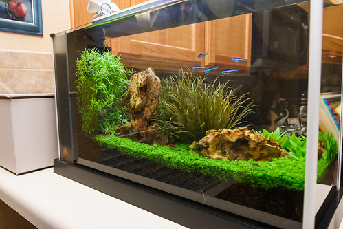 high tech planted fluval spec v aquarium