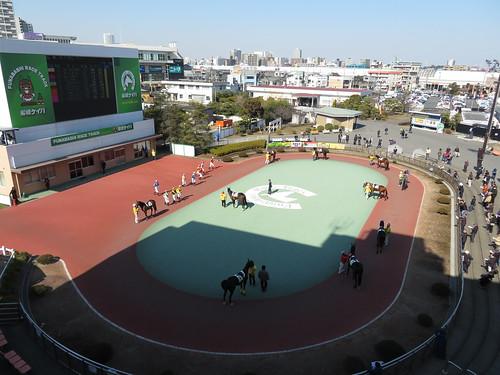 船橋競馬場の4階から見たパドック