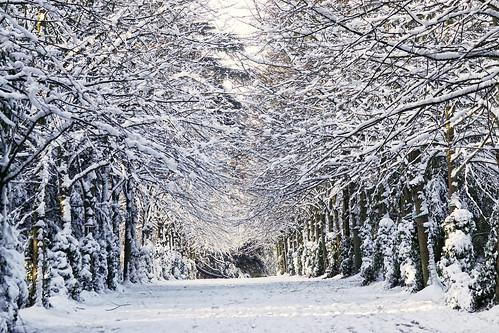 paysagedhiver hiver arborétum verrièreslebuisson neige