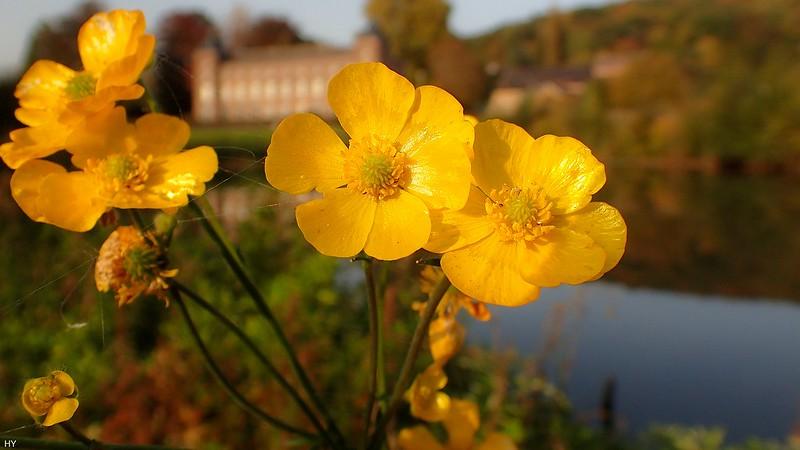 Flowers - 4629