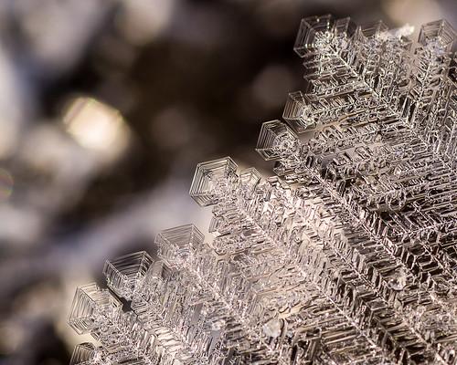 Ice Flower Fractals
