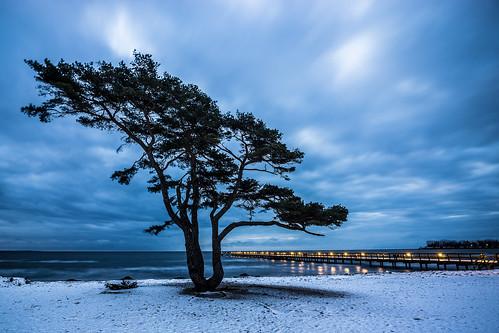 ostsee balticsea ahus tree pine kiefer baum trä tall blue blå blau landscape landschaft sand strand beach water heaven himmel vatten