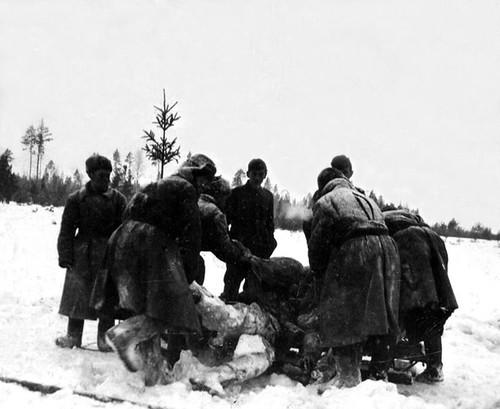 Østfronten (5884)