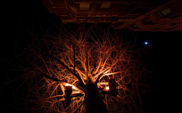 Orange tree crown.