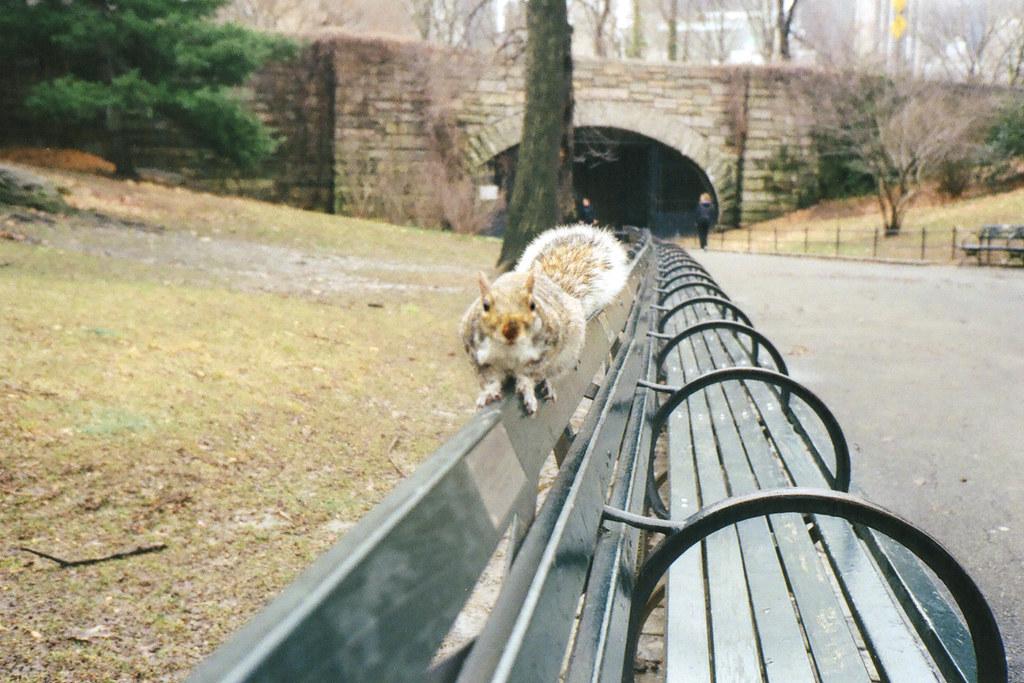 Resultado de imagen de ardillas central park