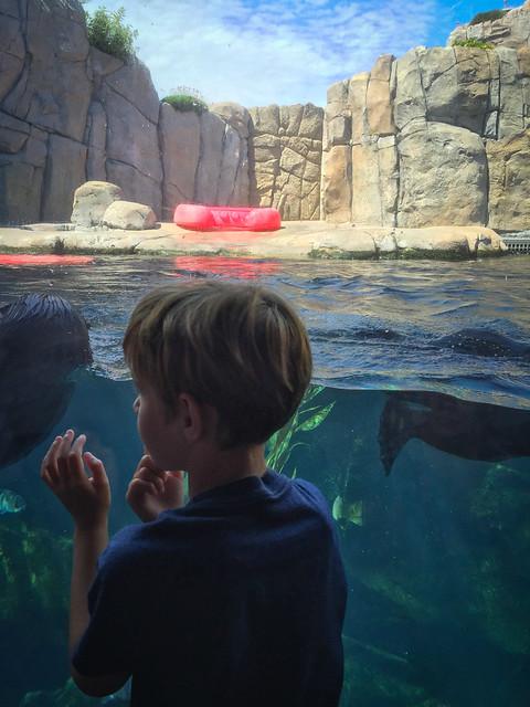 Monterey Bay Aquarium 3236