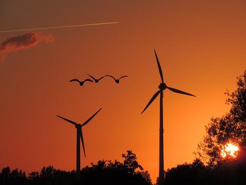 sunset night clouds goose wildgänse