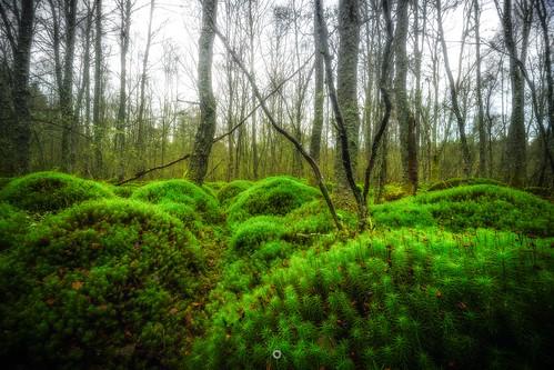 bracketedexposure canon focusstack forest green hdr landscape leefilters longexposure moss nature perthshire scotland trees winter