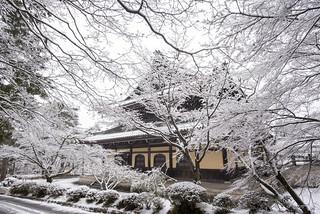 Snowdrops 雪の花   by Patrick Vierthaler