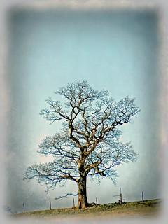 A tree on the skyline near Rigmaden Park