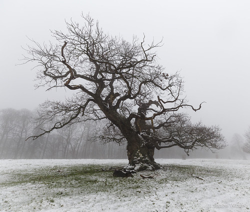 canon6d historic shawnwhite awe bold cold confidence conviction deciduous enchanting fog hardwood landscape snow spiritual tree trees weather winter woodland croft england unitedkingdom gb old character