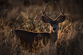 Red Deer in Evening Sun | by Bernd Thaller