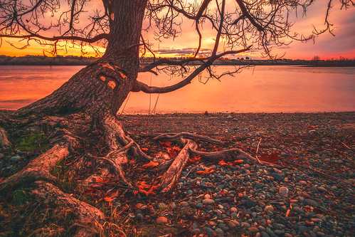 sunrise red colorful colors richland kennewick pasco tricities columbiariver river reflection washington sonya6000 sony rokinon lesliegrovepark tree rocks shore water waterscape