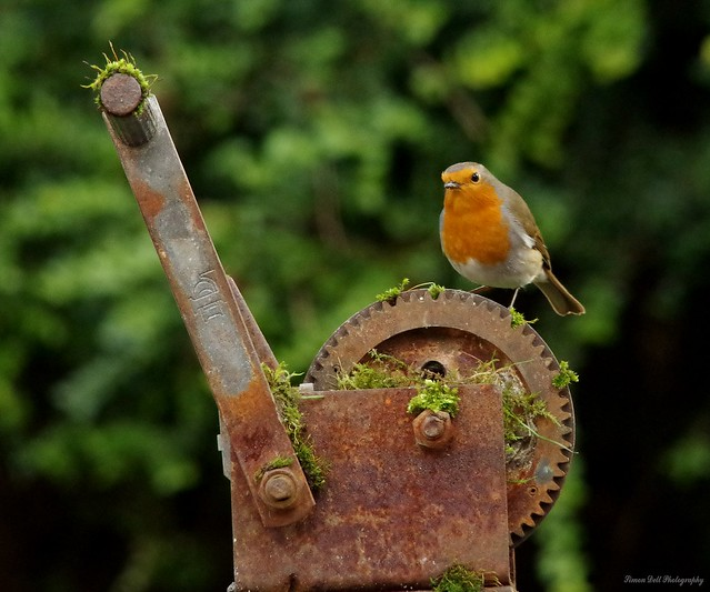 robin on rusty winch (2)