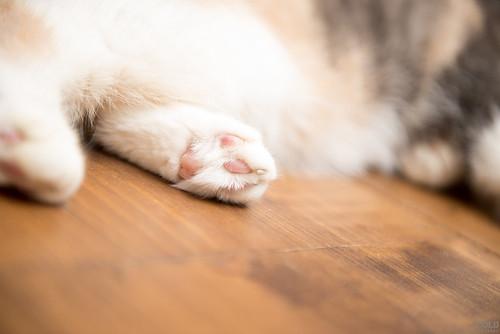 [台北 寵物攝影]貓咪寵物攝影_logo(21) | by cold0328
