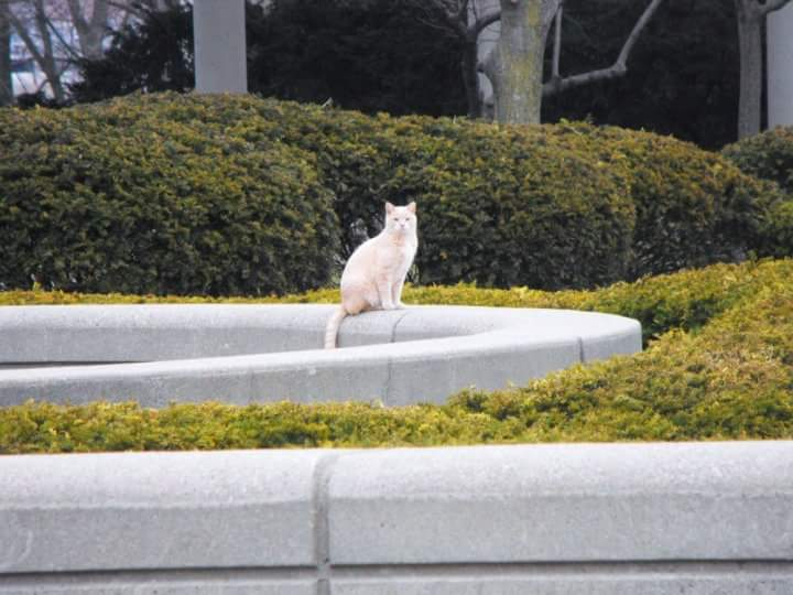 stray cat cincinnati ohio March 2010