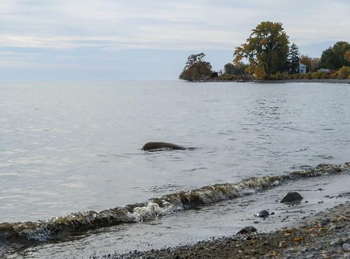 autumn princeedwardcounty ontario canada lakeontario lakeshore lake waves beach