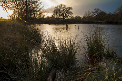 shobrookepark crediton sunflare sunset lake pond fishing poles reed reeds trees rays flare canon eos50d tamron 1750mm calm quiet tranquil winter evening middevon devon sleet clouds outdoors nature walk water reflections longexposure park