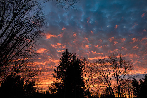 upstate ny new york rochester pittsford sunrise dawn morning color beautiful serene sky clouds winter trees silhouette branches