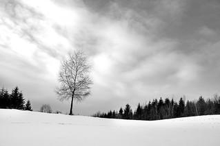 BW_WinterLandscape | by lskornog