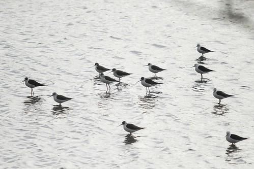 EAAF059 Yatsu Tidal Flats