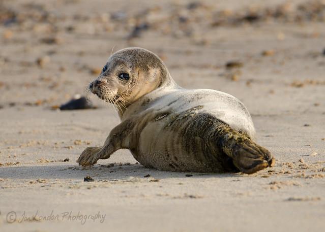 20171116 Seals at Winterton