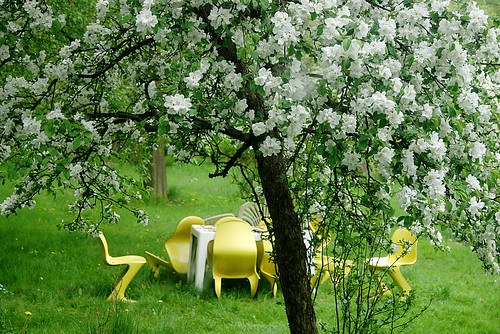 Apple blossoms and yellow chairs