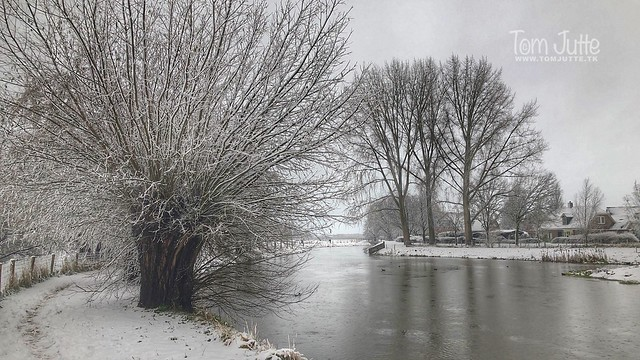 Winter at the Kromme Rijn, Odijk, Netherlands - 0432
