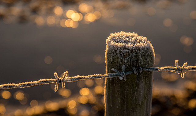 A Sharp Frost