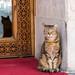 Katze, skeptisch