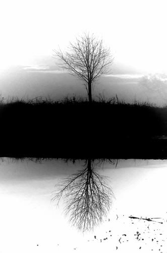 misty clouds bw black white trees mist water walk winter