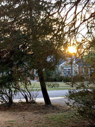 baltimore maryland home frontyard trees branches sunset firstsunin5days htmt