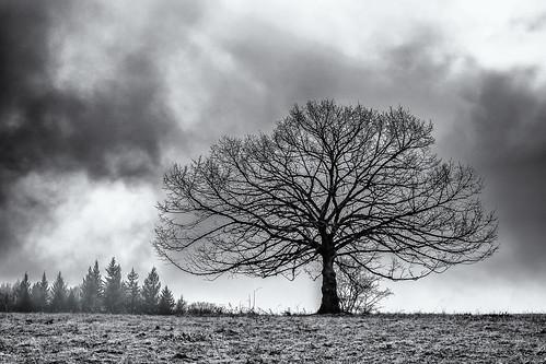 anlässe bäume em5ii fototour hdr himmel mzuiko2518 omd olympus pflanzen schwäbischealb silhouette wolken bw clouds monochrome sw sky trees metzingen badenwürttemberg deutschland de