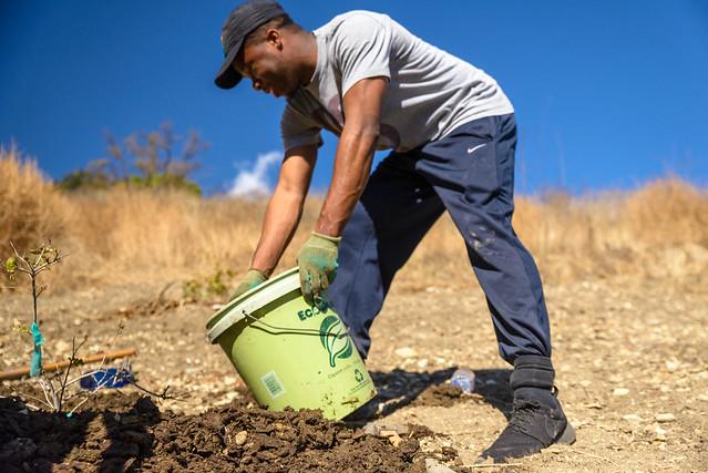 Calabasas Tree Care