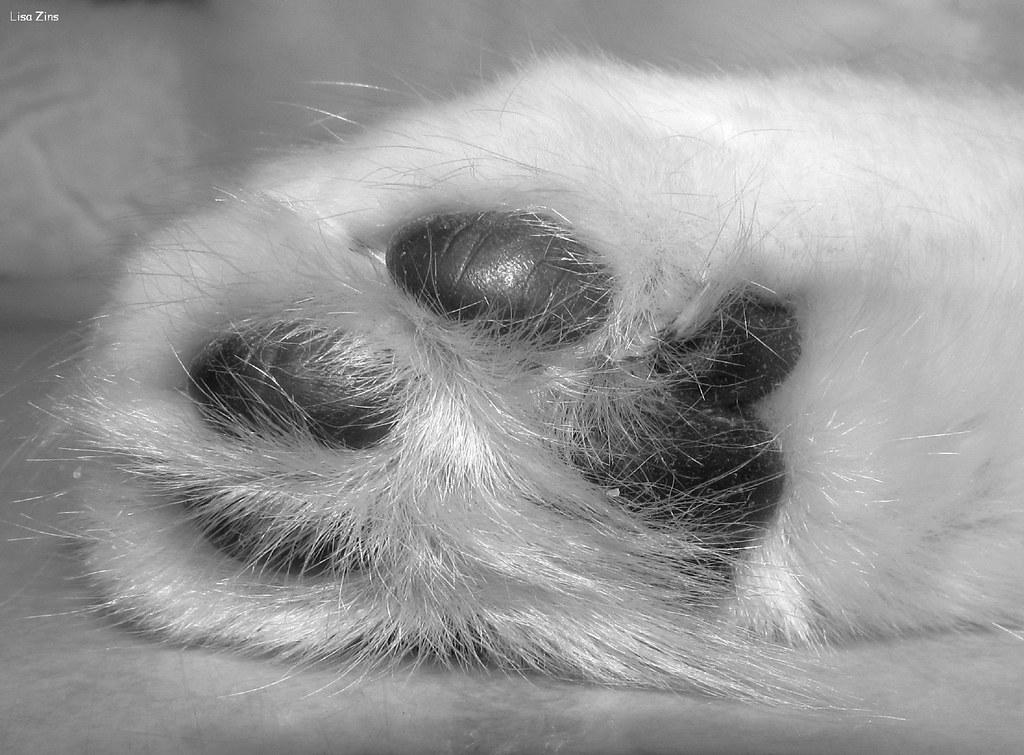 A Little Paw