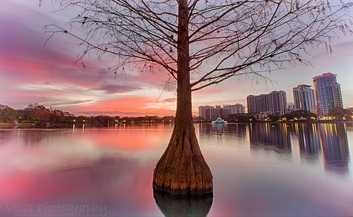 cypress cypresstree nature tree sunrise colorful color cloudlovers cloudheaven reflecting reflection beautiful mornings lonely longshutterspeed longexposurejunkies longexposurephotography canonoffical canon lakeeola downtown downtownorlando urbanorlando urban citybeautiful cityscape landscapephotography landscape orlando florida winter hdr hdrphotography blending layers ngc