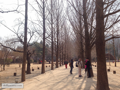 Nami Island - Gingkgo Tree Lane | by deffa_utama