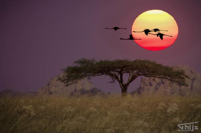 Sunset Swaziland flamingo