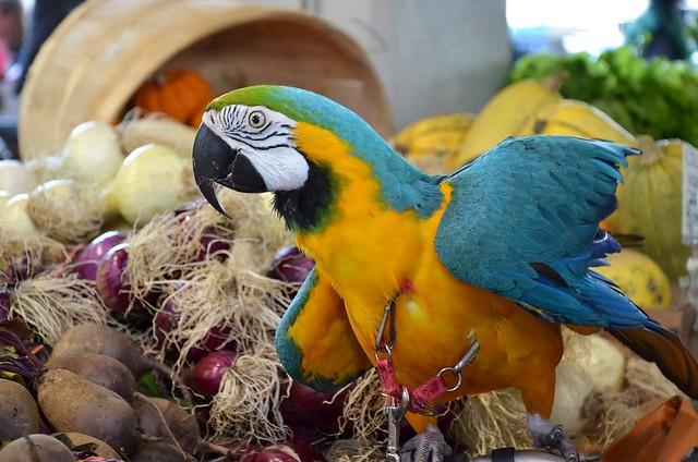 A parrot at the public market!