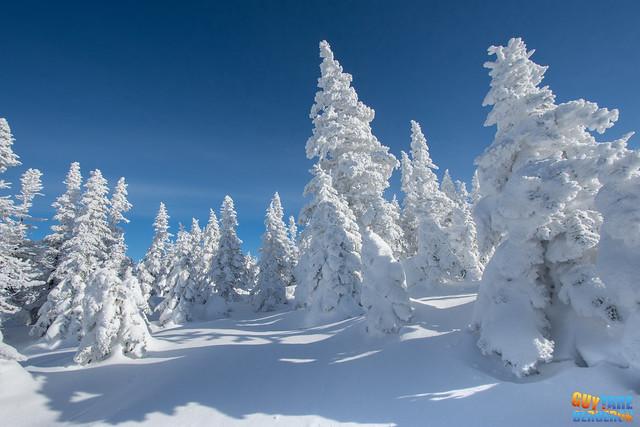 L'hiver en folie